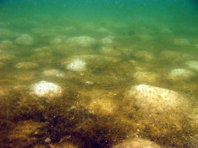 Brown material, seen here on the seabed near Ft. Morgan, Ala., during the first week in August 2010, is not oil, scientists have determined. Press-Register / Ben Raines