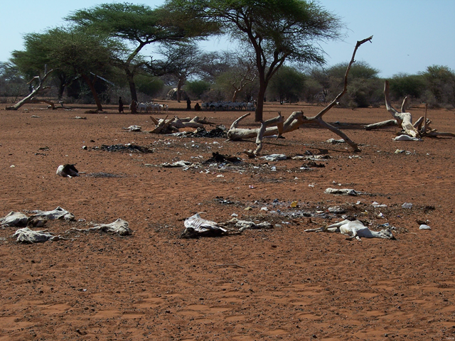 Somalia livestock killed by drought, 2006. Famine Early Warning Systems Network (FEWS NET) / gallery.usgs.gov