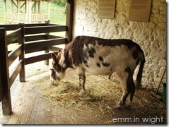 Carisbrooke Castle - famous Carisbrooke donkeys