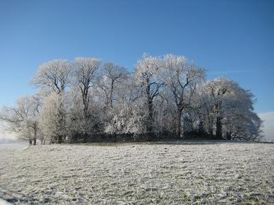 Muxton Marsh Nov, Dec 2010 070