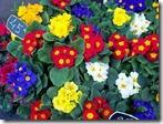 parisflower1_jpg_w300h225