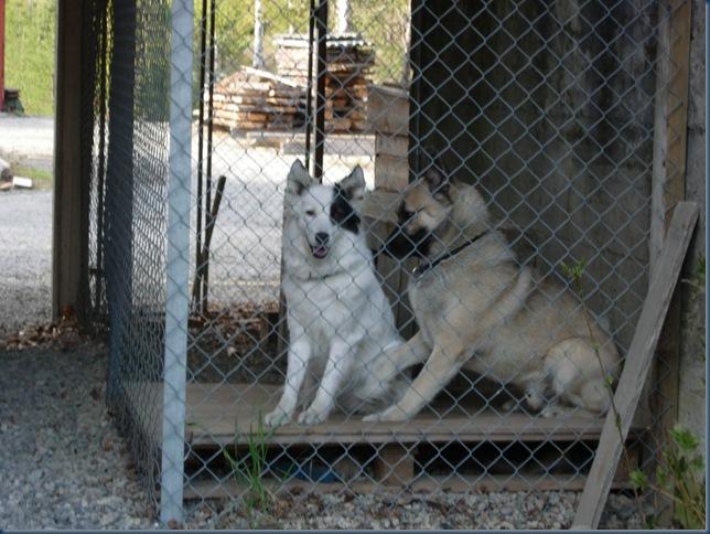 Kango og Vendela 003