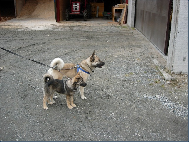 Karo og Kango 2 003
