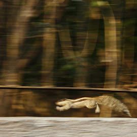 Carefree. by Tushar Dudeja - Novices Only Wildlife ( canon, panning, squirrels, 60d, wildlife, slowshutter, lazyshutter )