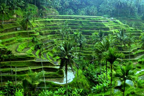 صور الطبيعة في الخلابة اندونيسيا