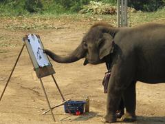 الفيل يرسم لوحة