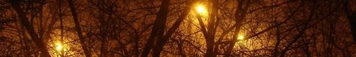 trees - header image