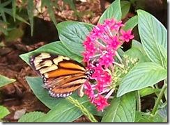 butterfly2_bw