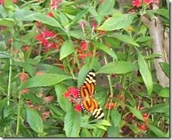 butterfly3_bw