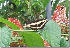 butterfly4_bw