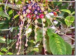 plant1_bw