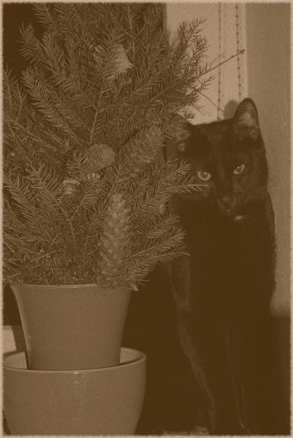 seepia kass