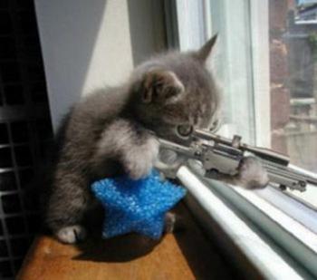 imagen de un gato con un rifle