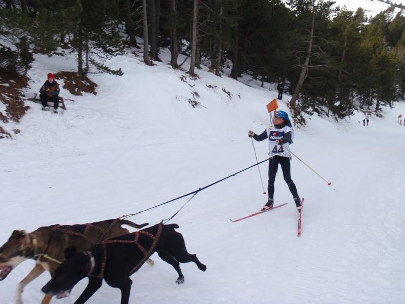 skijorer