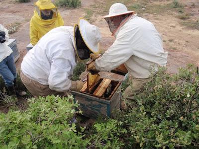 Treballant en una caixa d'abelles