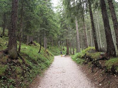 Aproximació per un bosc humit i frondós