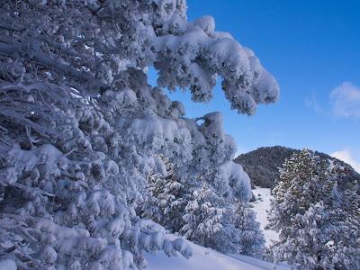 Neu sobre els arbres