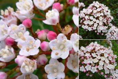 Ver flores cheias de flores