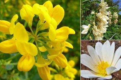 Ver flores montejunto I
