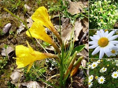 Ver flores montejunto II