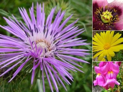 Ver flores montejunto III