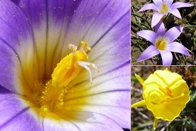 Ver Flores2