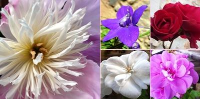 Ver Flores Casal São Simão