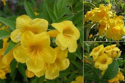 Ver flores amarelas