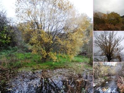 Ver paisagens a caminho de pinhel