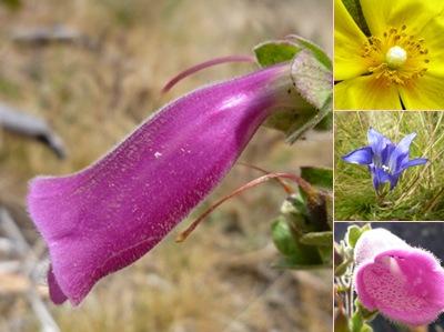 Ver Flores Serra III