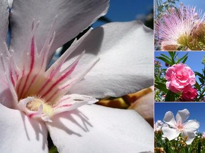 Ver flores lapa