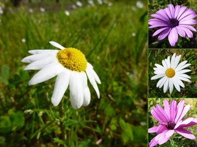 Ver flores penedo