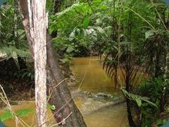florestaruma83