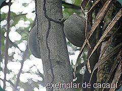 florestaruma66