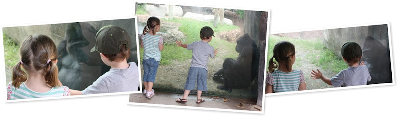View zoo 2009