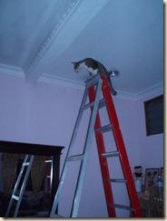 sehari dalam hidup handyman