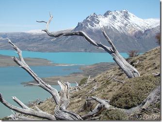 101109 NP Perito Moreno (11)