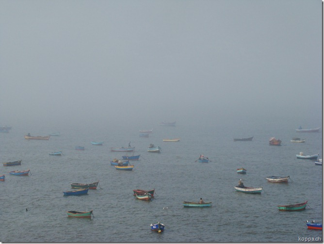 110321 Tortuga Bay (5)