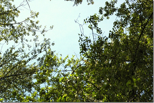 Sunny Spring 073