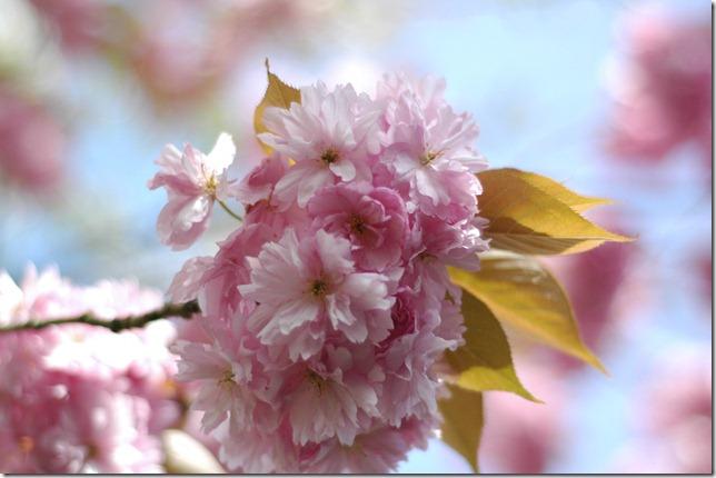 Sunny Spring 067