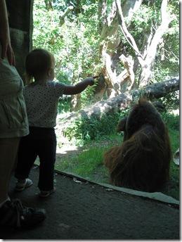 Zoo 070