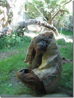 Zoo 073