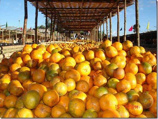 http://lh3.ggpht.com/_qQQQg0ODhzo/TQMZU1igv7I/AAAAAAAAK48/WdMNWhJ18Fw/orange%20festival%20manipur_thumb%5B1%5D.jpg