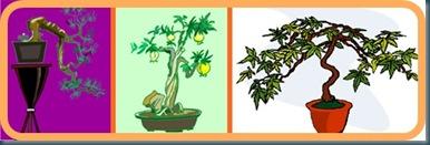 bonsai part 3