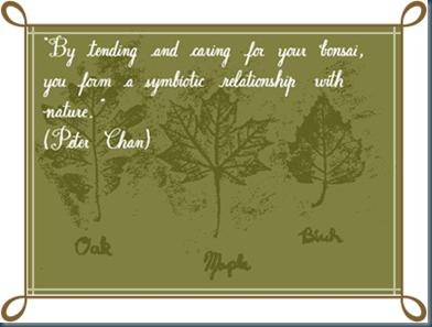 part 3 quotation bonsai