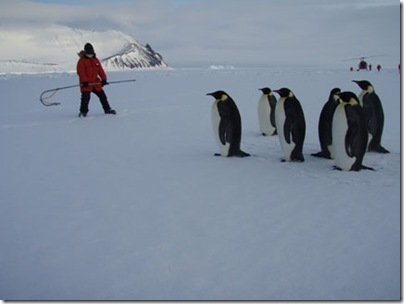 Kozue heads off the penguins during our final penguin round up
