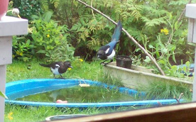 magpies join forces