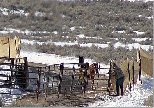 Antelope01-23-2011 037 (2)
