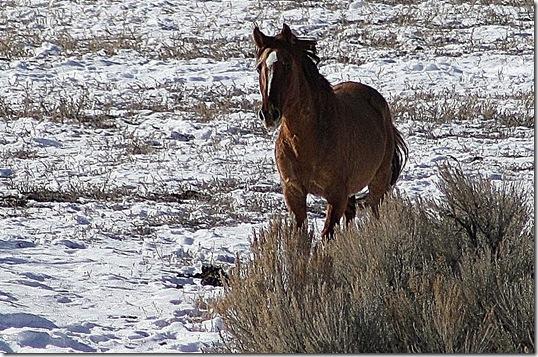Antelope01-23-2011 083 (2)