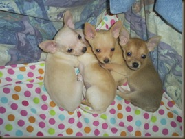 Callies Babies and two of Sable's